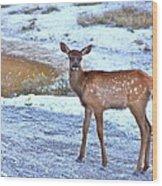 Rocky Mountain Elk Calf Wood Print