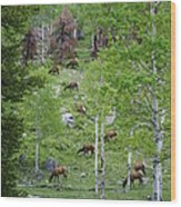 Rocky Mountain Elk Herd Wood Print