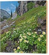 Rocky Mountain Summer Landscape Wood Print