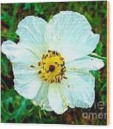 Rocky Mountain Wild Flower Wood Print