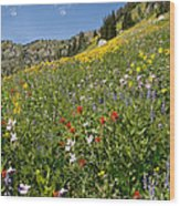 Rocky Mountain Wildflower Landscape Wood Print