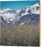 Rocky Mountain Woodland Wood Print