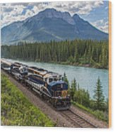 Rocky Mountaineer At Muleshoe On The Bow River Wood Print by Steve Boyko