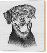 Rocky The Rottweiler Wood Print