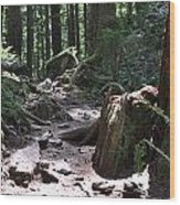 Rocky Trail Wood Print