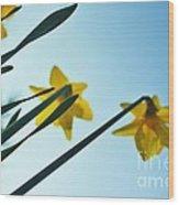 Rodchenko's Daffodils Wood Print