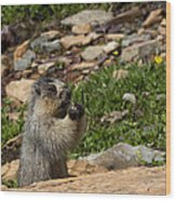 Rodent In The Rockies Wood Print