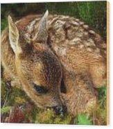 Roe Deer Fawn Wood Print