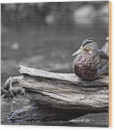 Rogue River Duck Wood Print