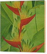 Rojo Sobre Verde Wood Print by Diane Cutter