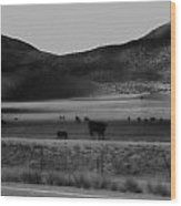 Rolling Hills And Cattle In Black And White Wood Print