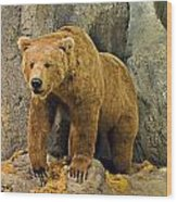 Rolling Hills Wildlife Adventure 1 Wood Print