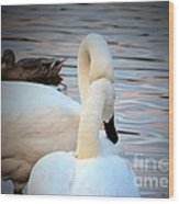 Romance Of The White Swans Wood Print