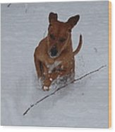 Romp In The Snow Wood Print