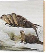 Romp Of Otters Wood Print