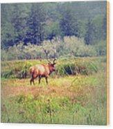 Roosevelt Bull Elk Wood Print