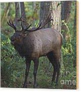 Roosevelt Elk Bugling Wood Print