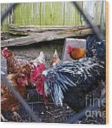 Rooster And Chickens Wood Print