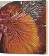 Rooster Colors Wood Print