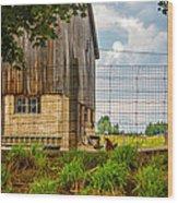 Rooster Turf Wood Print