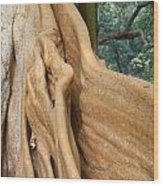 Root Of A Tree Nature Background Wood Print