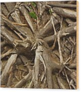 Root System Wood Print