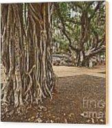 Roots - Banyan Tree Park In Maui Wood Print