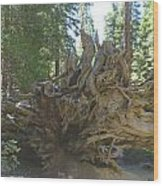 Roots Wood Print by Barbara Snyder