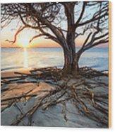 Roots Beach Wood Print