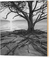 Roots Beach In Black And White Wood Print
