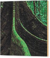 Roots Of A Giant Tree, Daintree Wood Print
