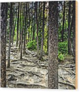 Roots Of Trees Wood Print