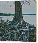 Roots On The Bay Wood Print