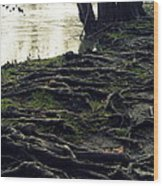 Roots On White River Wood Print