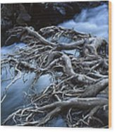 Roots Over Ozark Stream Wood Print