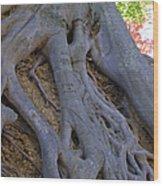 Roots Wood Print