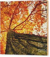 Roots To Branches IIi Wood Print