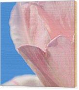 Rosa Del Cielo Wood Print