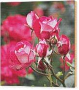 Rosa Molly Mcgredy Wood Print