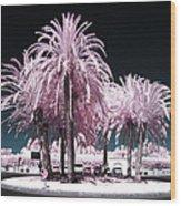 Rosa Palms Wood Print
