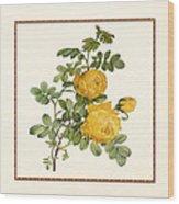Rosa Sulfurea -yellow Rose  Square Wood Print