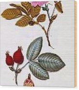 Rosa Villosa Wood Print