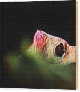 Rose 006 Wood Print