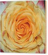 Rose 1 Wood Print