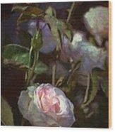 Rose 122 Wood Print by Pamela Cooper
