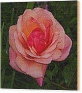 Rose 13 Wood Print