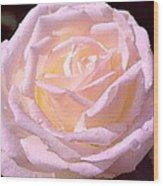 Rose 169 Wood Print