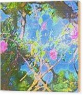 Rose 182 Wood Print by Pamela Cooper