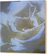 Rose 186 Wood Print by Pamela Cooper