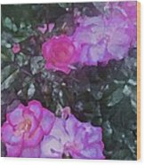 Rose 189 Wood Print by Pamela Cooper